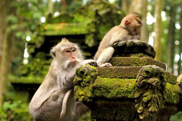 Visiter la Forêt des Singes (Monkey Forest) à Bali : réservations & tarifs