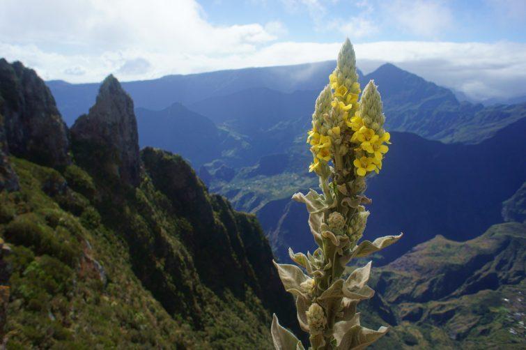 Les Makes, la Réunion