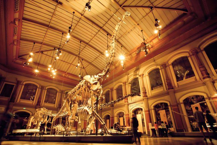 Squelettes géants de Brachiosaurus et de Diplodocus dans la salle des dinosaures, musée d'histoire naturelle, Berlin