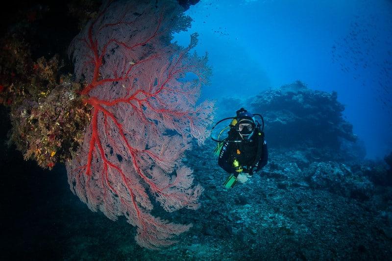 plongée calédonie (2)