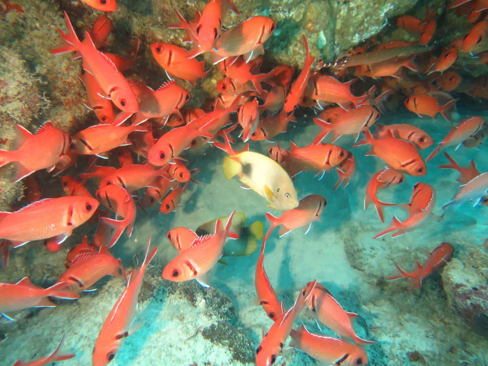 poissons cap vert