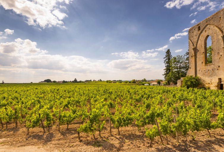 Les vignobles de Saint-Emilion