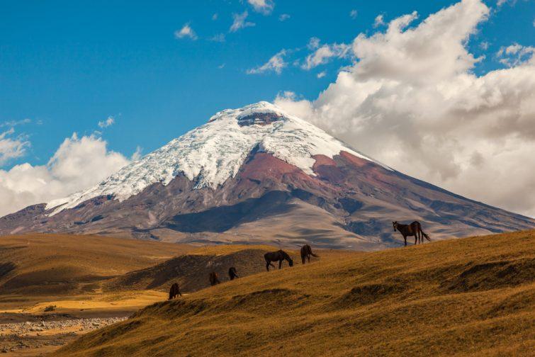Cotopaxi, un volcan actif, au coucher du soleil avec des chevaux au premier plan