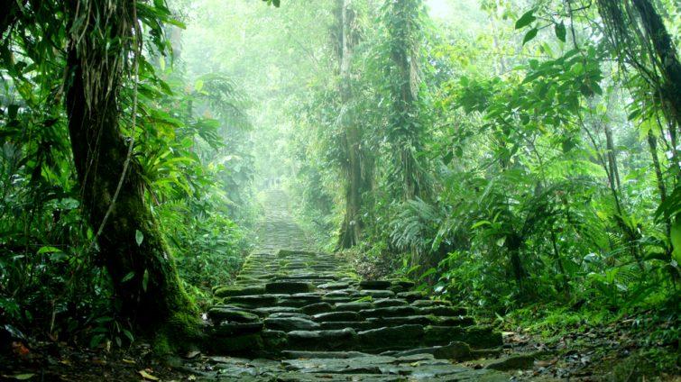 Escalier caché au fond de la jungle colombienne appartenant aux ruines de Ciudad Perdida