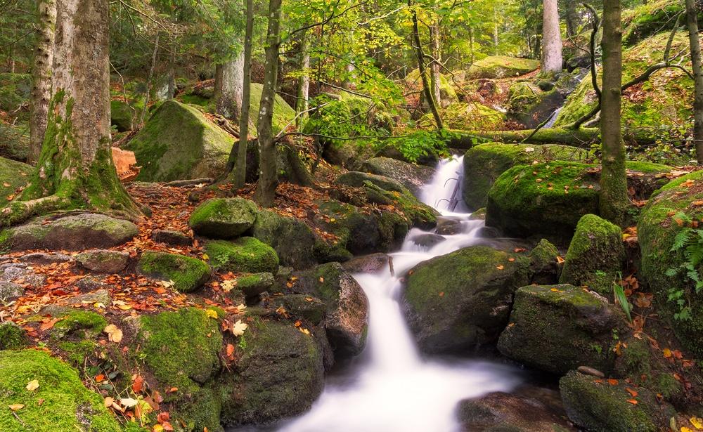 Cascades dans la forêt Noire en automne, Allemagne