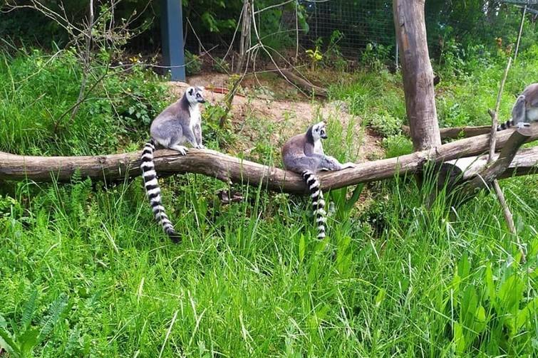 L'espace zoologique Exoticamis