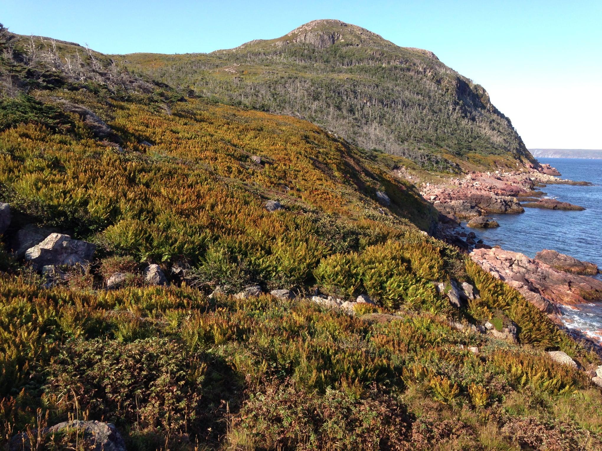 Visiter Saint-Pierre-et-Miquelon : l'Anse à Henry