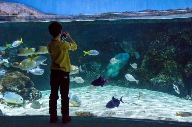 Les 10 meilleurs aquariums de France