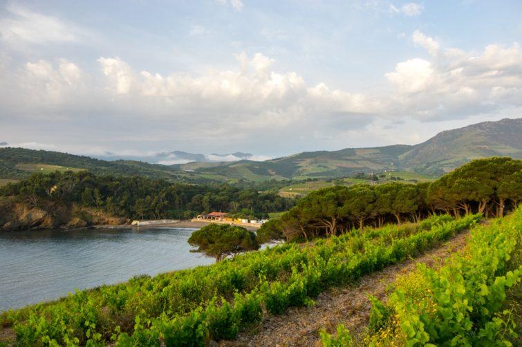 Vue sur les vignobles de Collioure