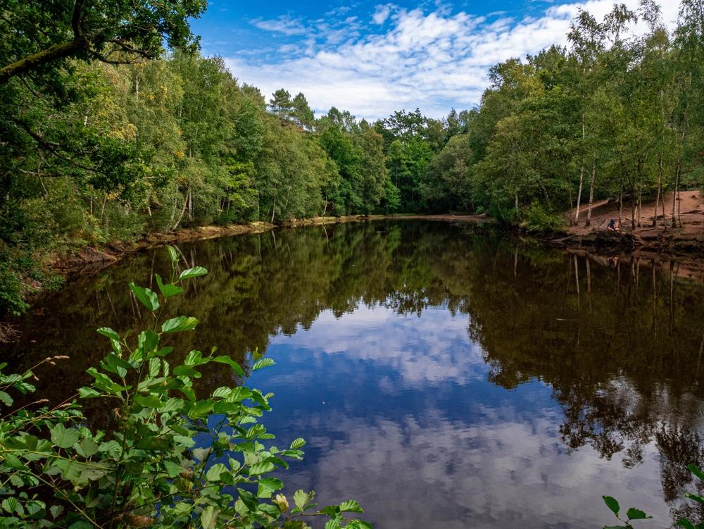 La forêt de Brocéliande, parmi les plus belles forêts d'Europe