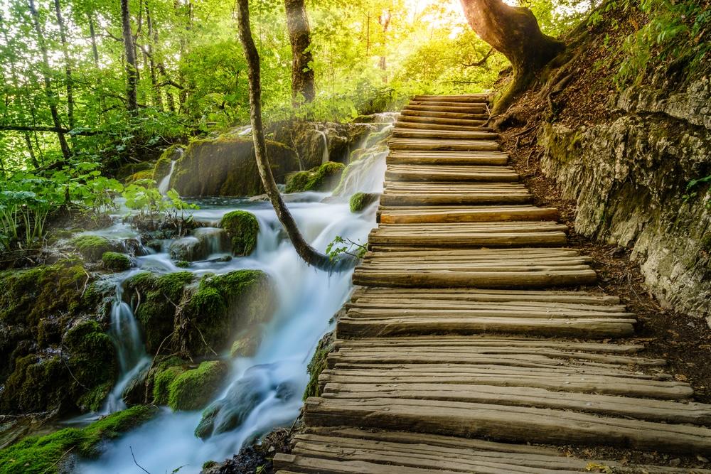Les plus belles forêts d'Europe : promenade le long d'un lac au sein de la forêt de Plitvice