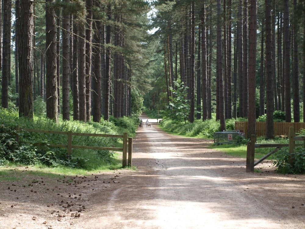 La forêt de Sherwood en Angleterre