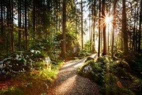Une forêt dans les Alpes, Allemagne, Europe