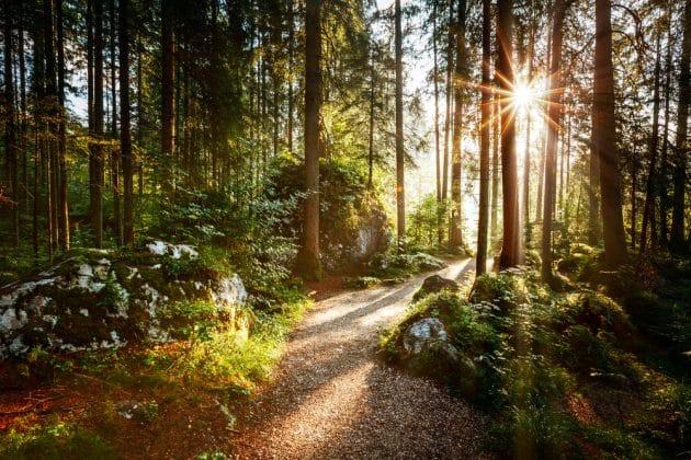 Les 10 plus belles forêts d'Europe