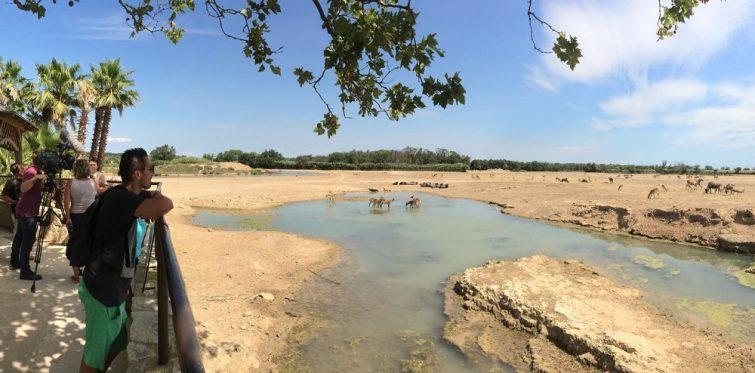 Vue panoramique de la Réserve Africaine de Sigean