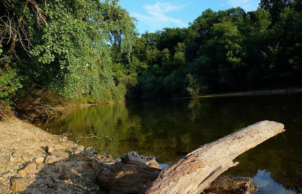 La forêt de Tronçais, Allier, France