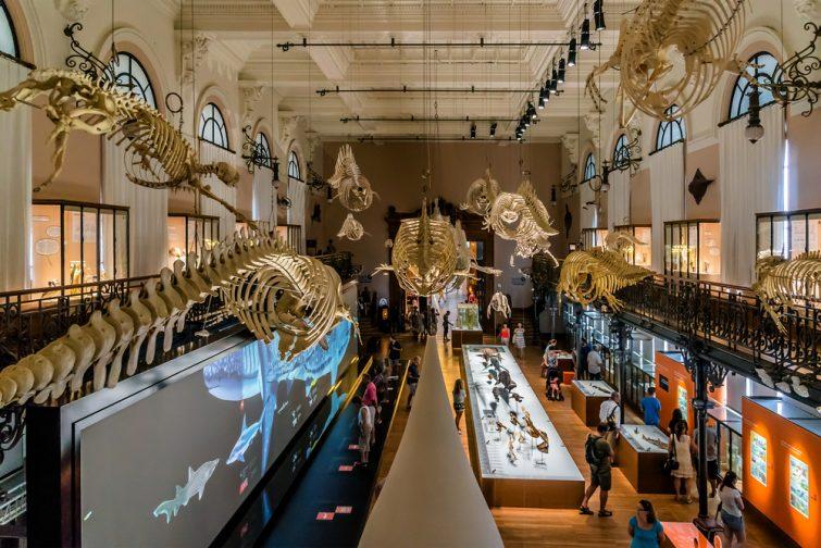 Aquariums de France : Musée océanographique de Monaco