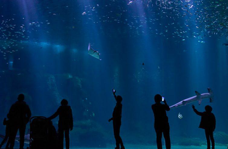 Aquariums de France : Nausicaá