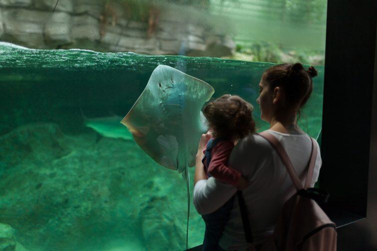 Aquariums de France : Océanopolis de Brest
