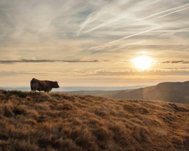 Les 9 choses incontournables à faire dans le parc naturel régional de l'Aubrac