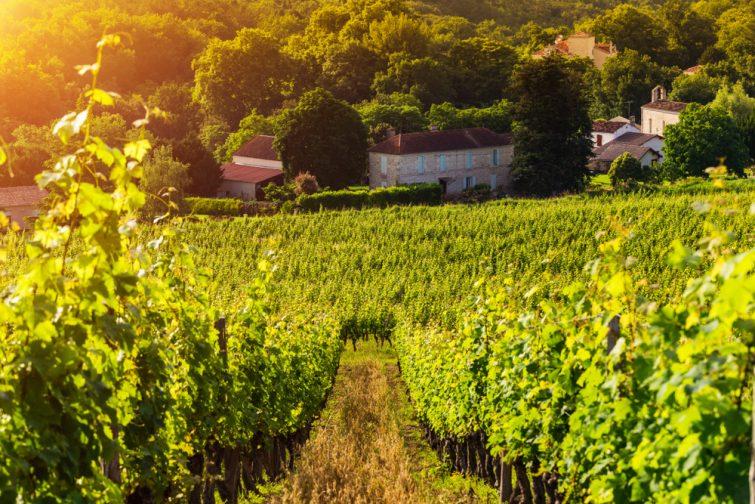 Les vignobles de l'Armagnac en camping-car
