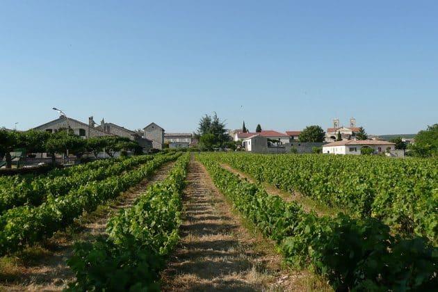 Les 8 plus beaux vignobles d'Occitanie