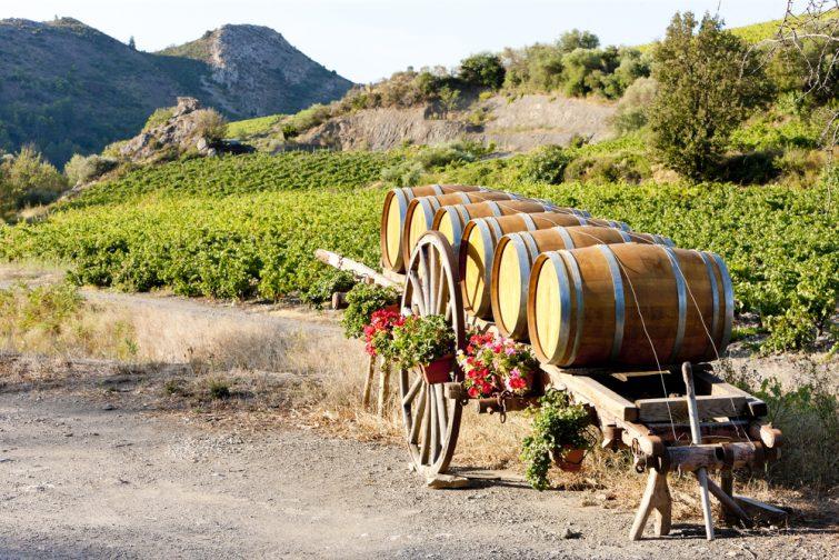 Vignes des Corbières et quelques tonneaux