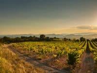 Vignobles au coucher du soleil, Occitanie