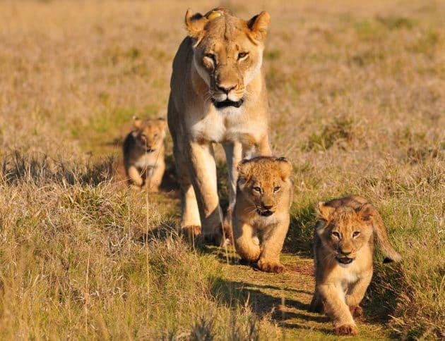 Visiter la réserve africaine de Sigean : billets, tarifs, horaires