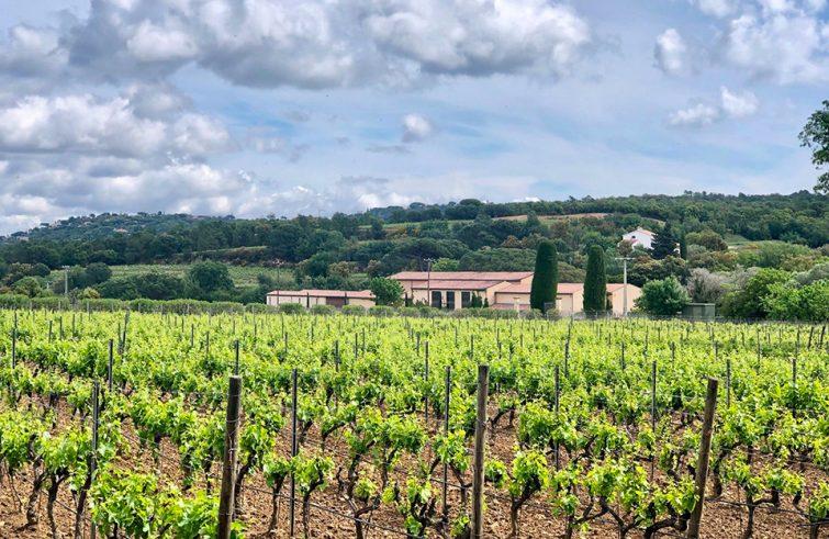 Domaine viticole de Porquerolles