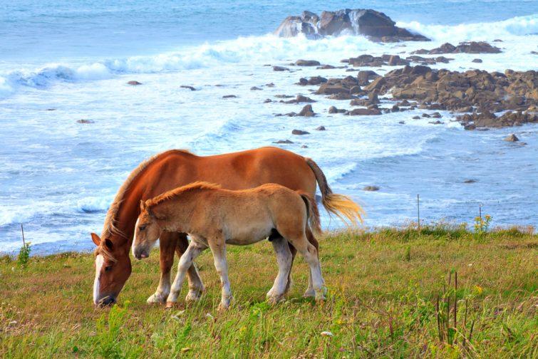 Visiter le Parc Naturel Régional d'Armorique : Balade équestre au Finistère
