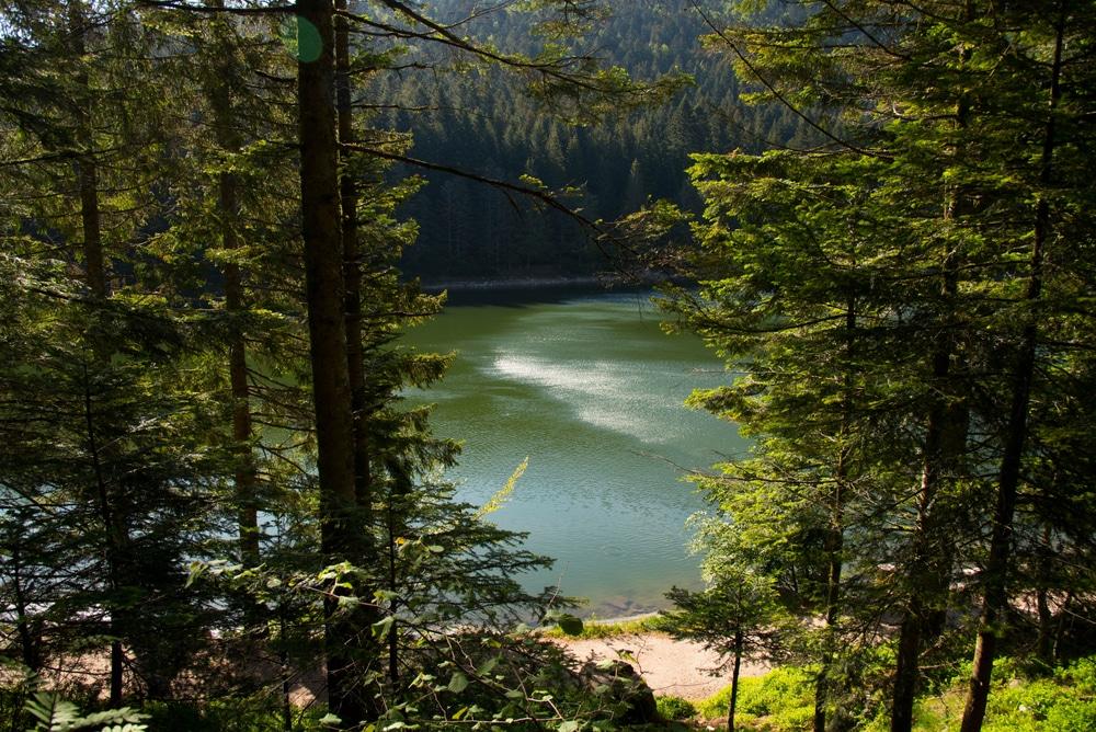 Canada dans les Vosges
