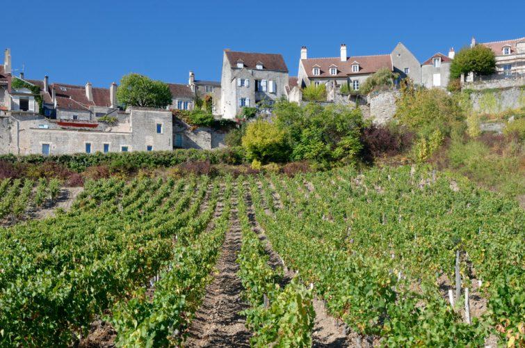 Le vignoble de Vézelay