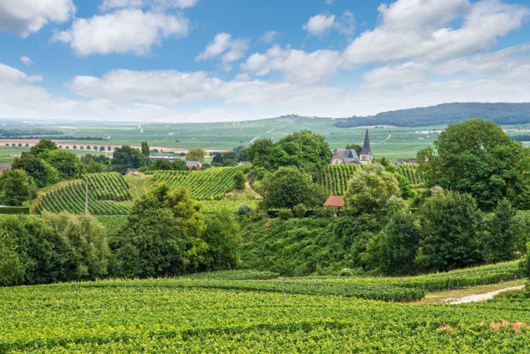 Paysage viticole, Montagne de Reims, France