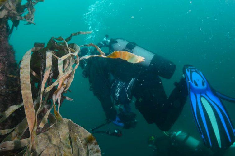 Plongée dans la baie de Douarnenez