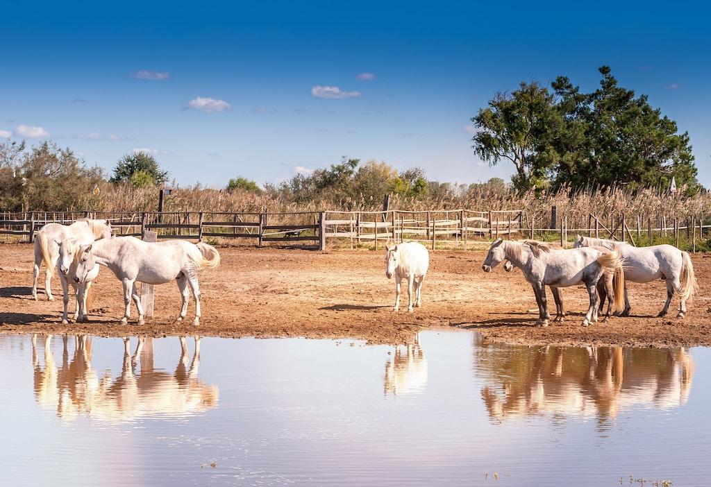 Texas en Camargue
