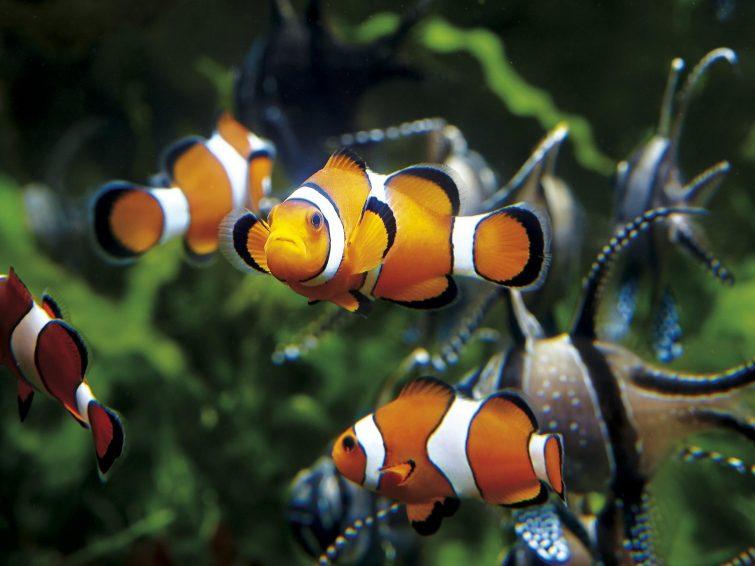 Visiter Saint Malo : aquarium de Saint Malo