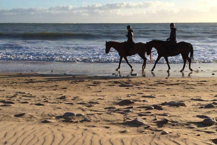 Balade en cheval sur l'Île de Ré
