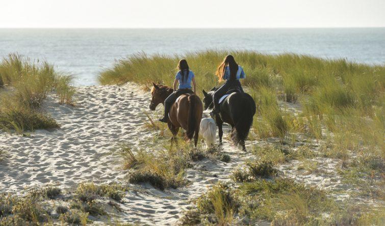 Visiter les Landes à cheval