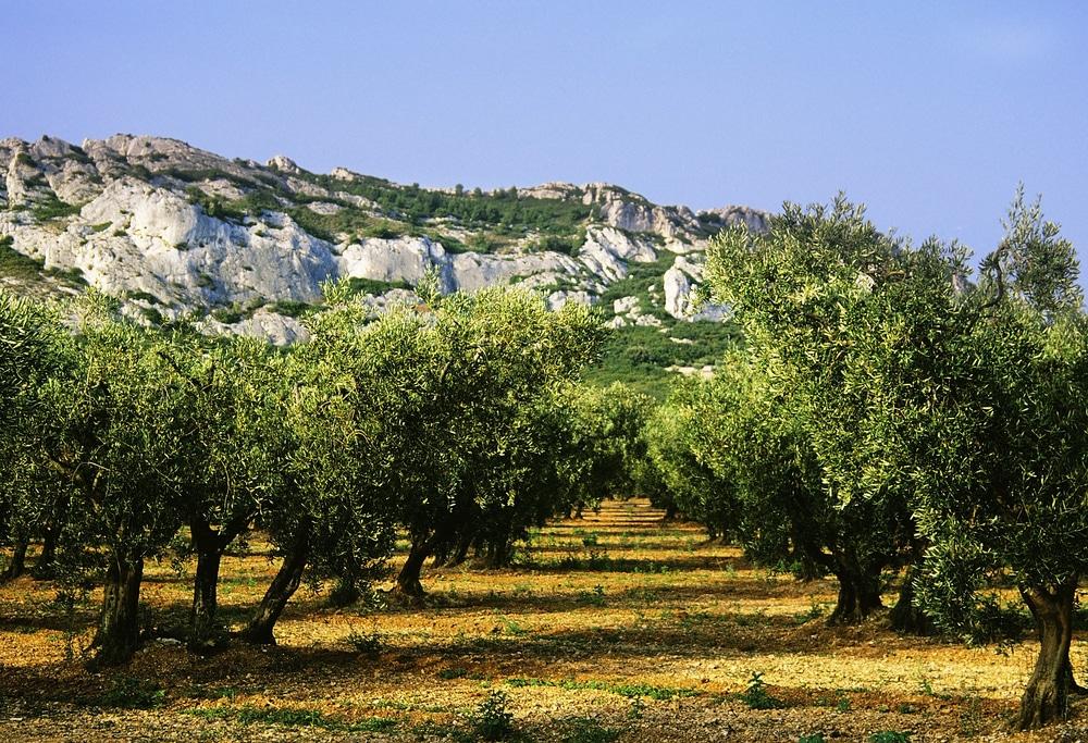 Balade autour de Marseille : Les Alpilles