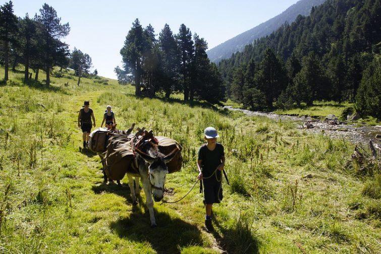 Visiter le Pic du Canigou : Randonnée guidée au Pic du Canigou : Randonnée à dos d'âne