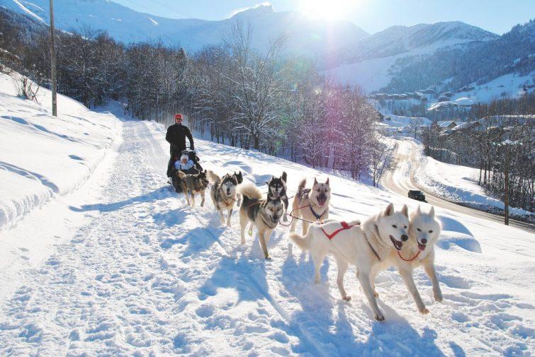 valmorel chiens de traineau