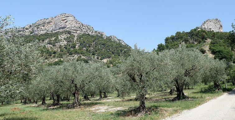 Baronnies provençales