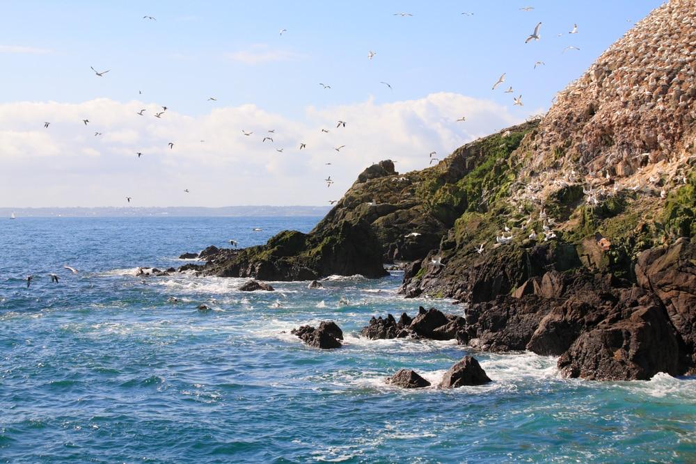 Oiseaux, Sept Îles, Bretagne