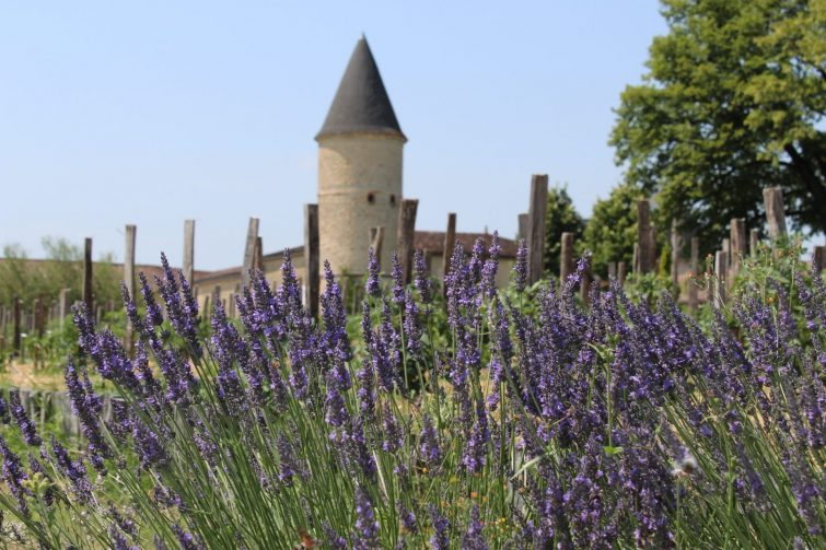 Visiter Gironde Chateau Guiraud