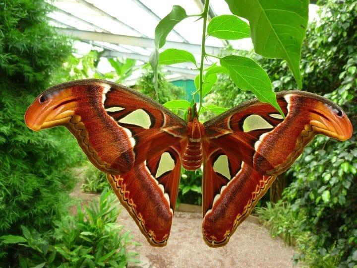 Ile au Papillon