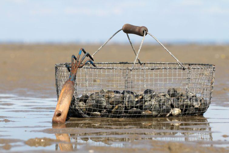 Pêche Noirmoutier