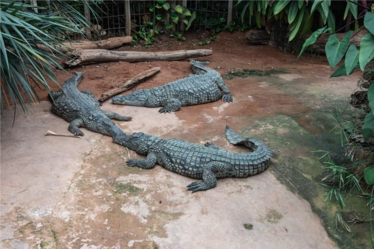 Visiter Drôme : La Ferme aux Crocodiles