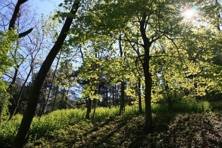 Forêt de Marsanne