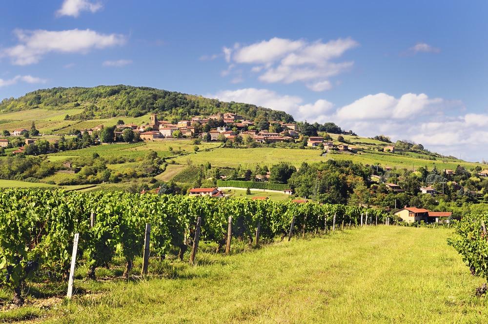Balades autour de Lyon : Beaujolais